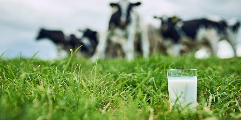 Cow Milk Glass